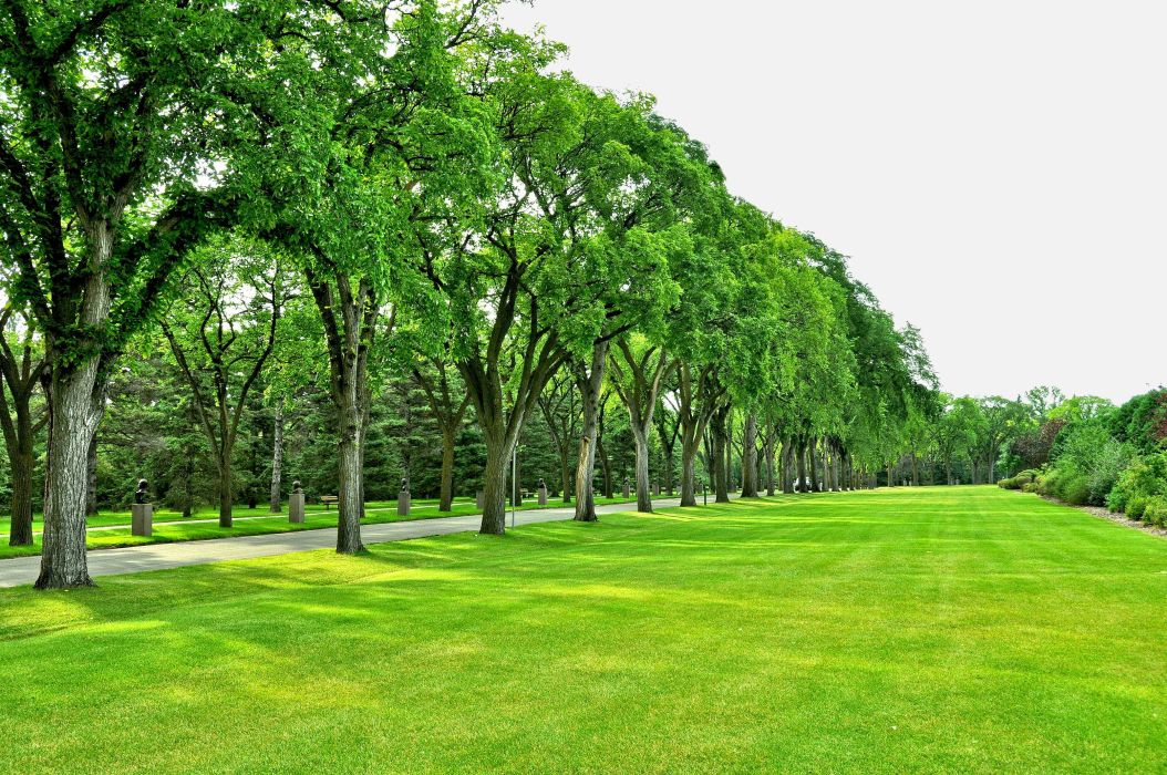 park trees road field lawn wallpaper