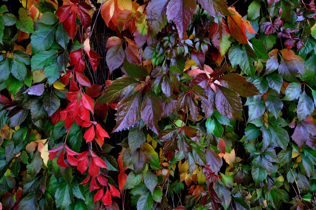 plant leaves branches nature wallpaper