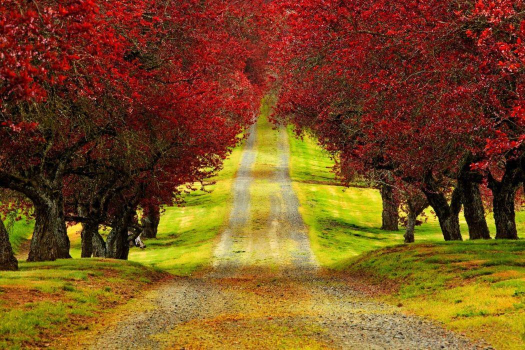 road tree autumn wallpaper
