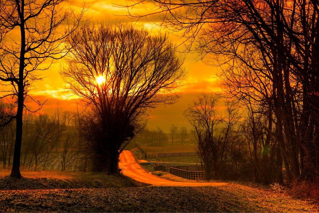 Sun Leaves Field Nature Sunset Sky Trees Forest Sunrise
