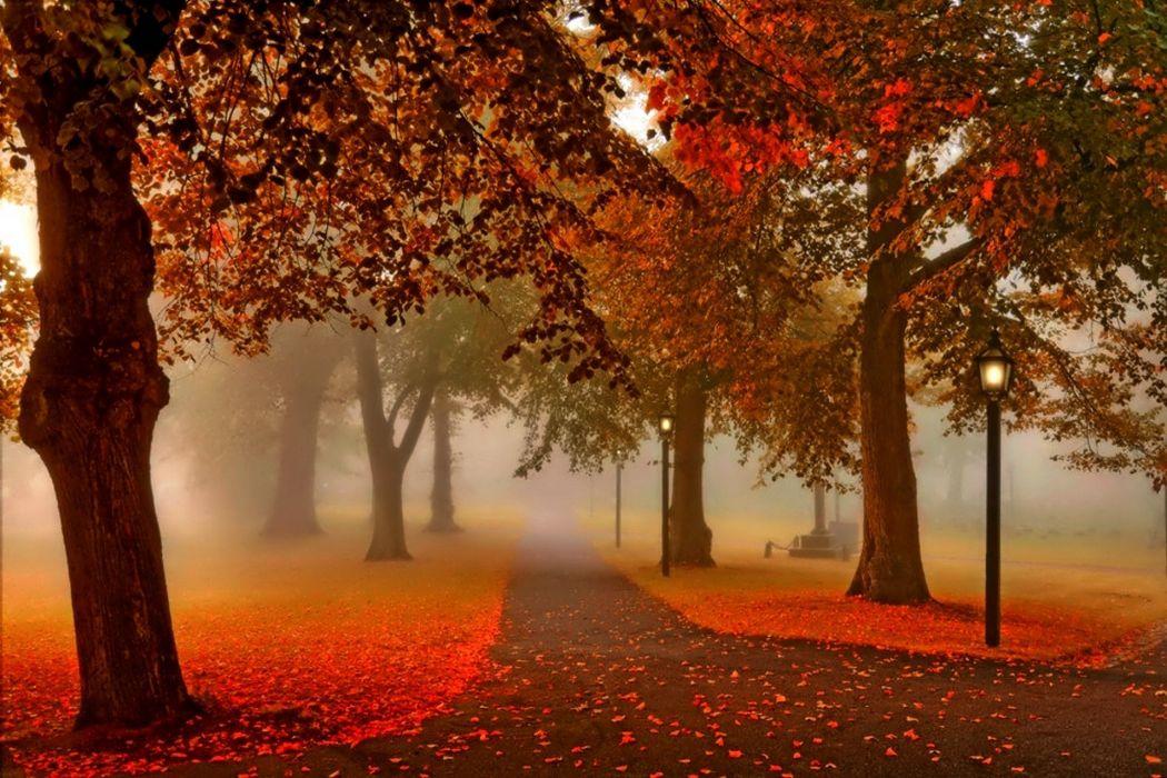 sunset nature park autumn lantern wallpaper