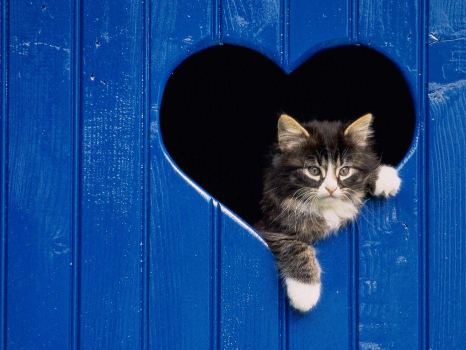 blue love cats animals pets wallpaper