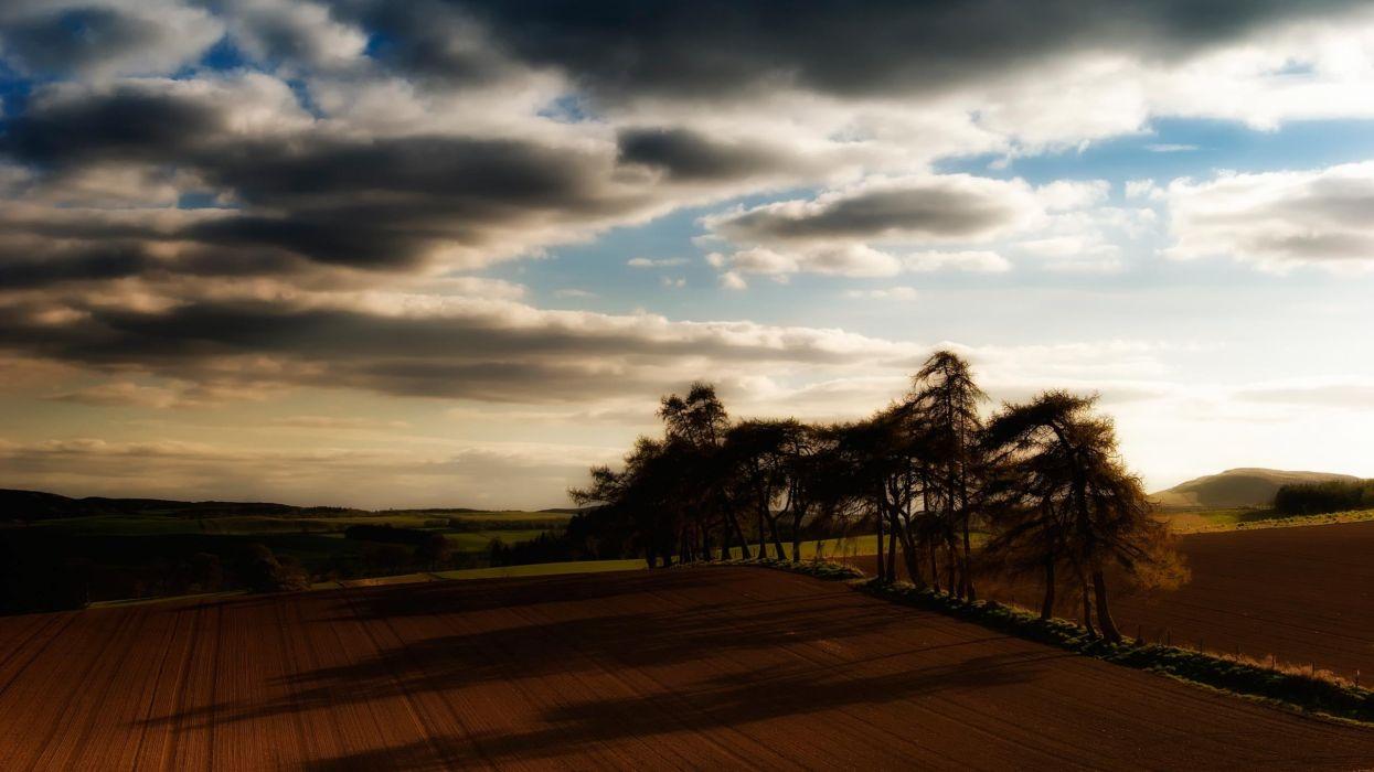 nature trees fields shadows widescreen wallpaper