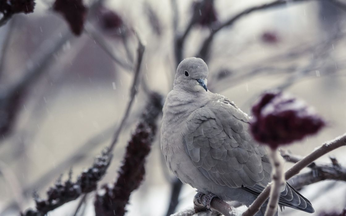 Bird Snow Winter wallpaper