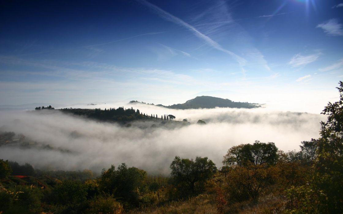 Fog Mist Trees wallpaper