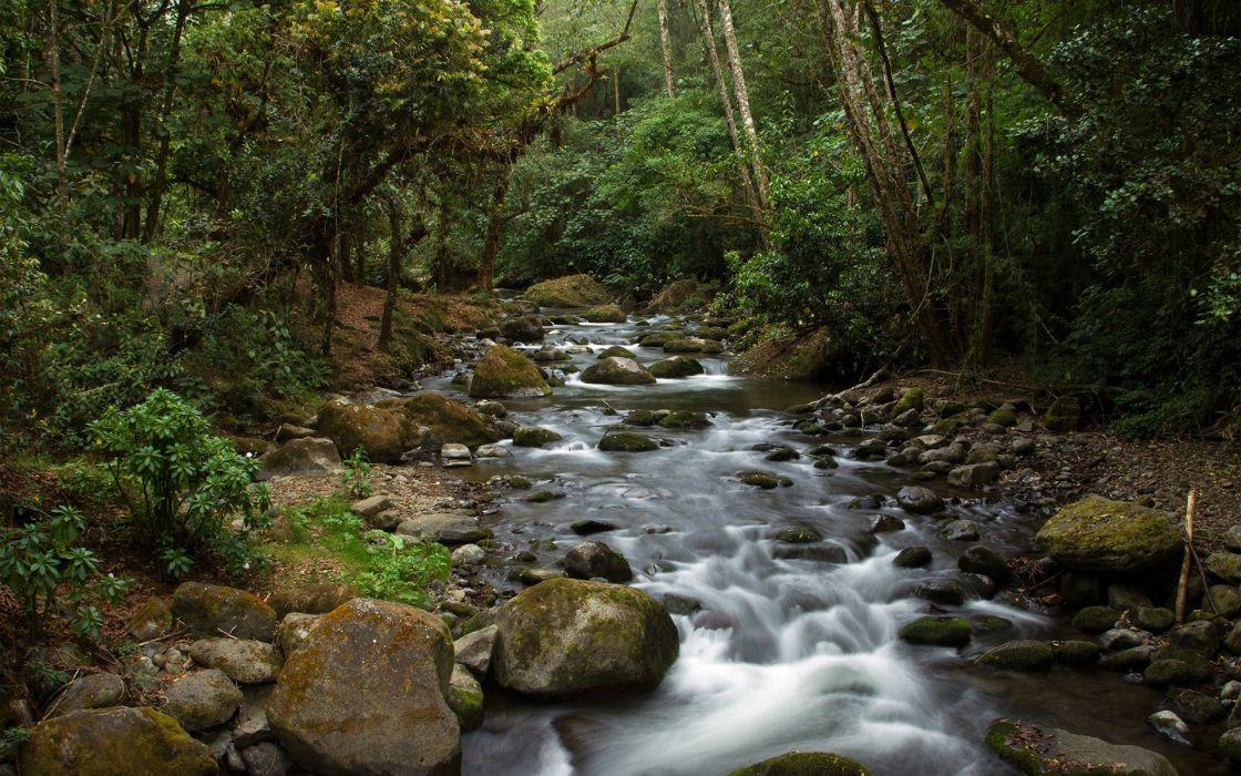 Forest Jungle River Rocks Stones Moss Trees wallpaper
