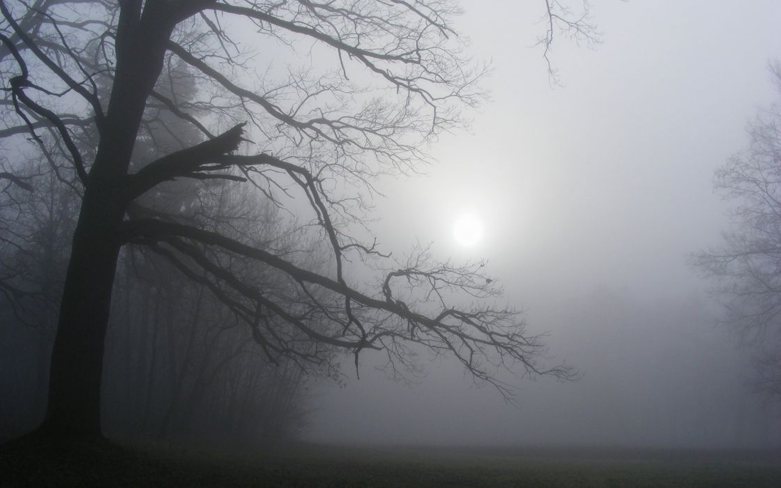 Sunlight Trees Fog Mist wallpaper