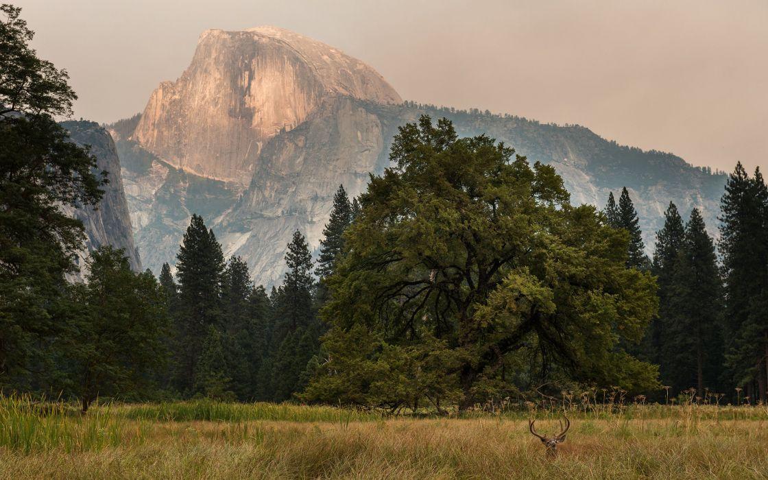 Yosemite Trees Mountain Grass Deer wallpaper