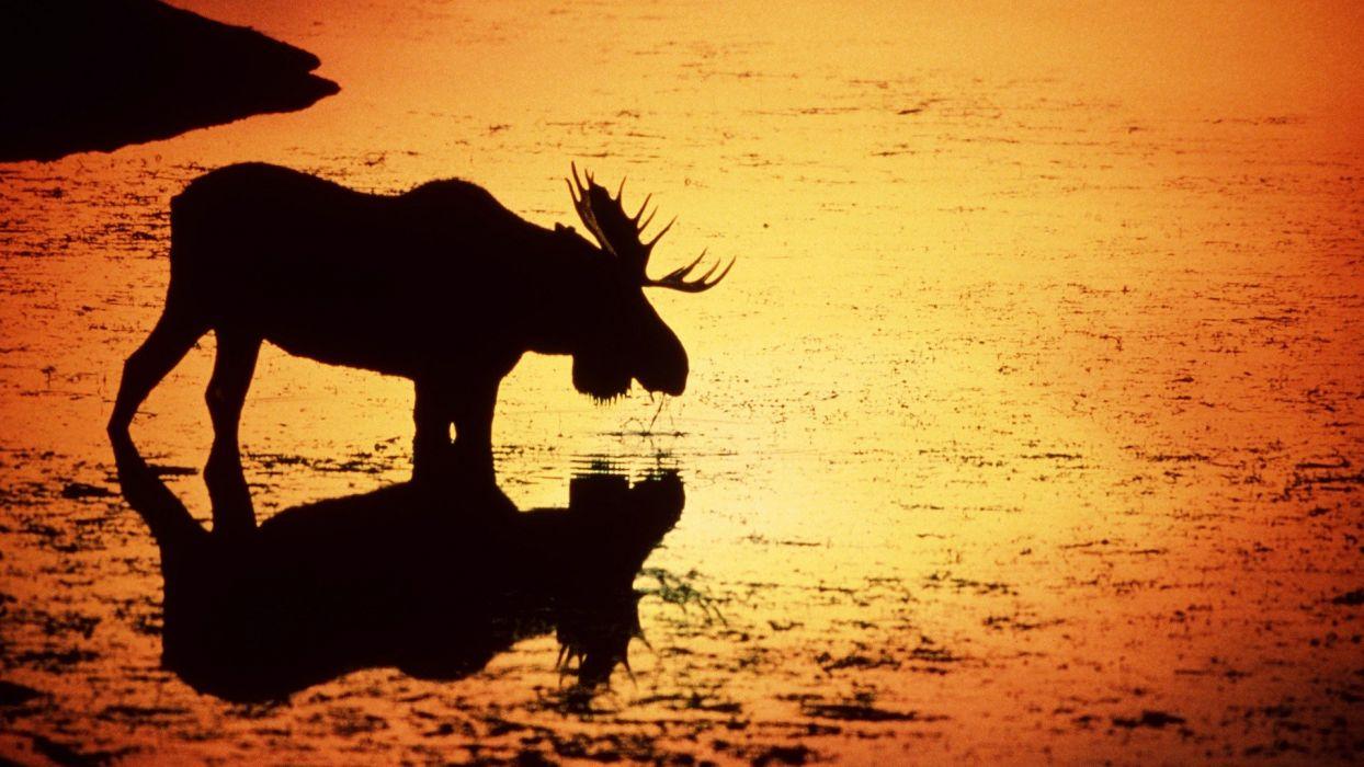 water sunset silhouettes deer Wyoming rivers moose wallpaper