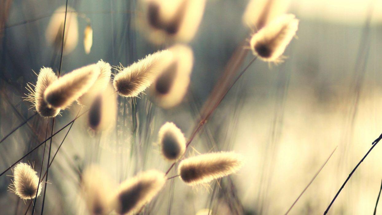 nature plants sunlight macro depth of field wallpaper