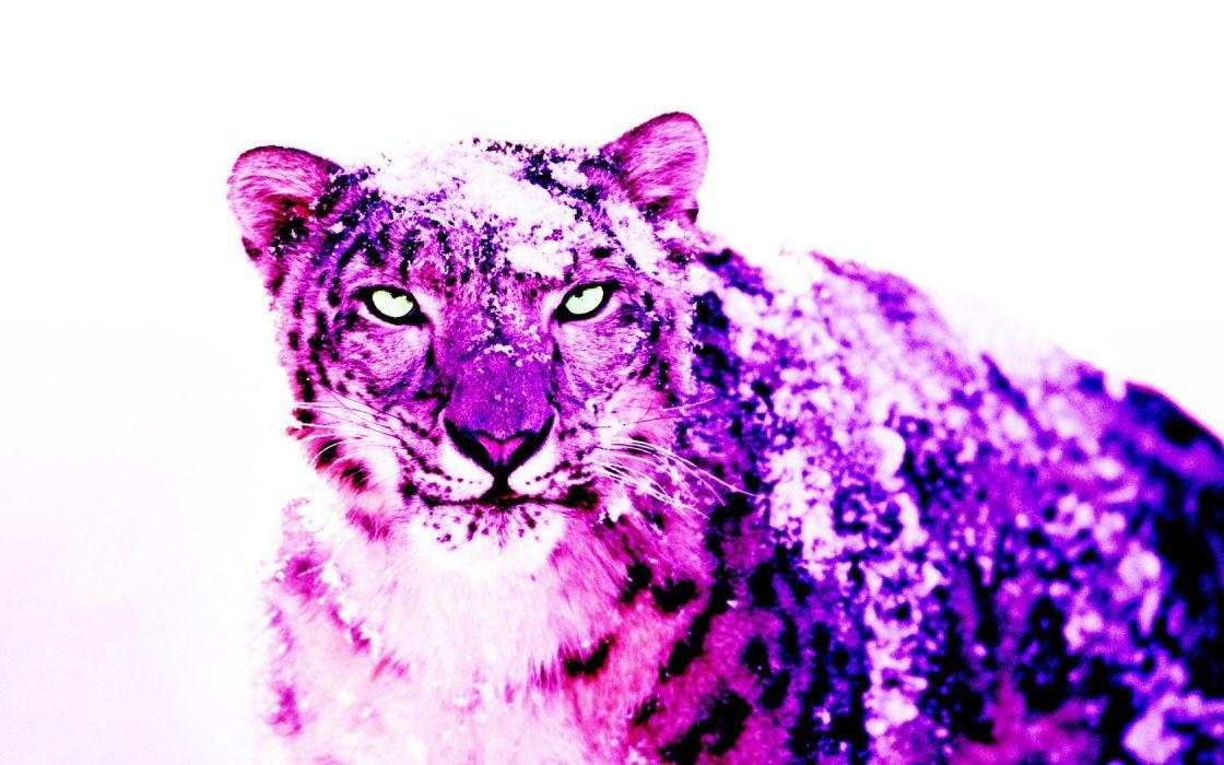 snow purple leopards wallpaper