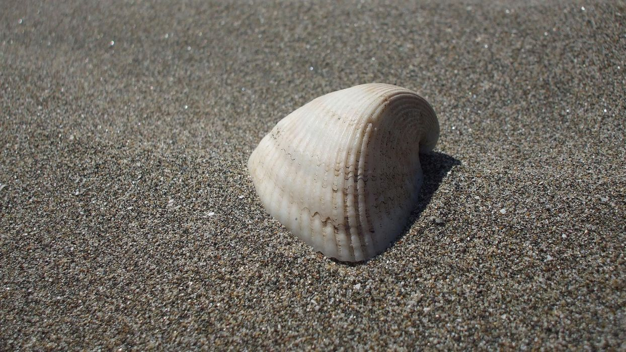 nature sand seashells wallpaper