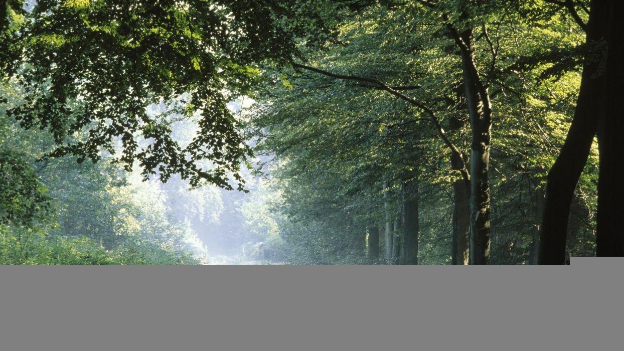 forests Germany fog wallpaper