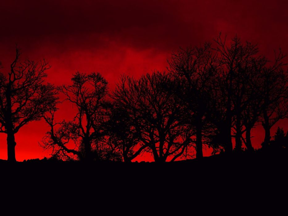 trees red blood poison skyscapes wallpaper