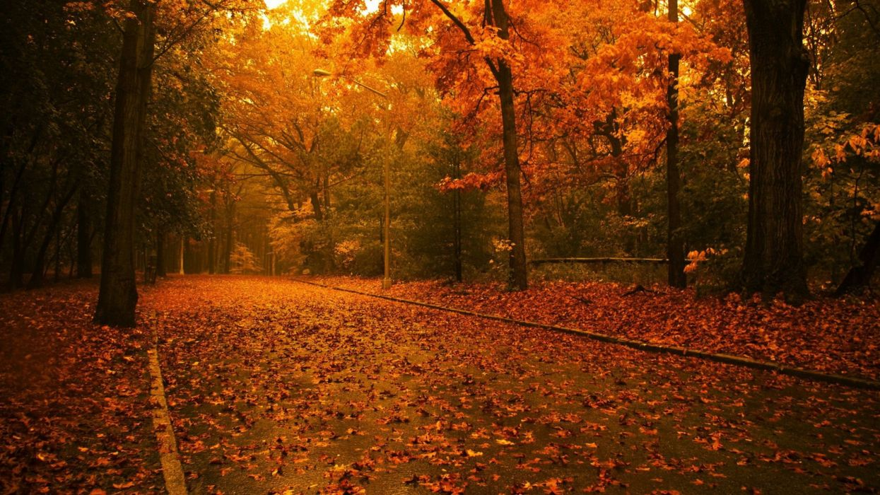 landscapes nature trees autumn forests fallen leaves wallpaper