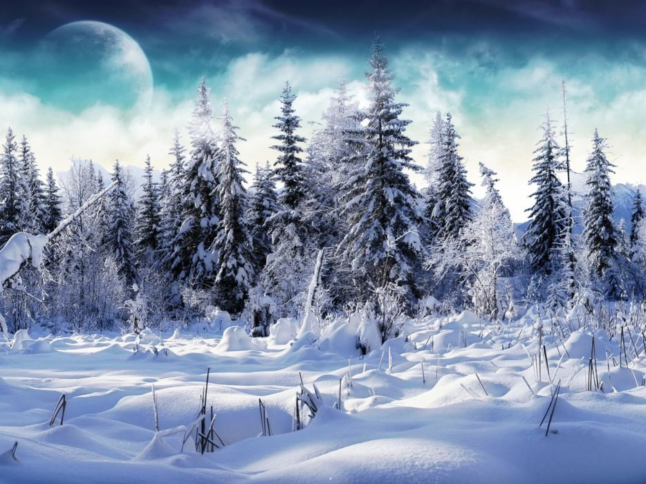 winter forests wallpaper