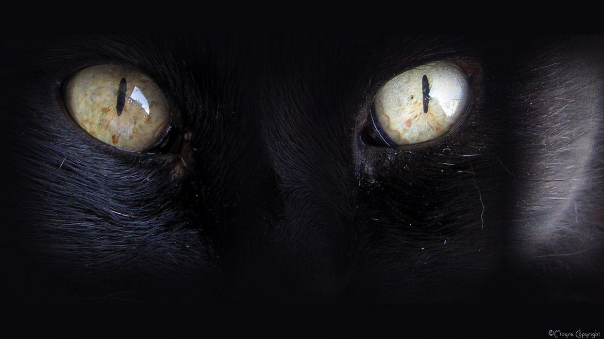 eyes black cats animals wallpaper