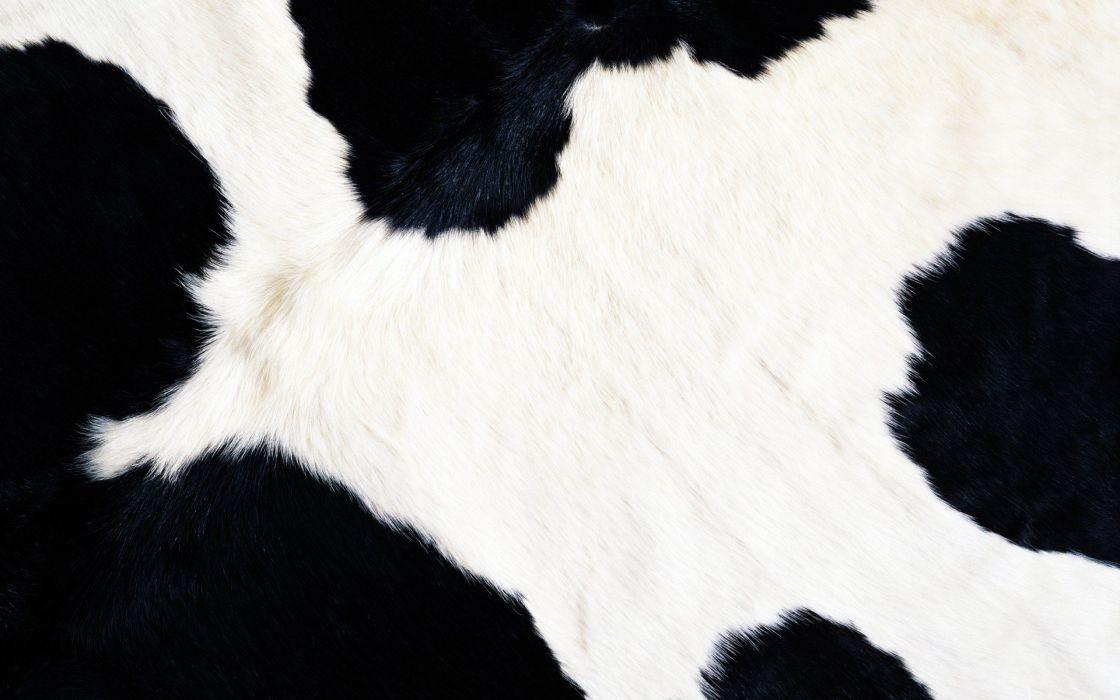 animals fur textures cows wallpaper