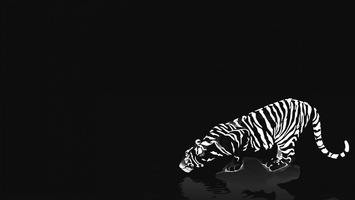 cats animals tigers white tiger reflections black background wallpaper