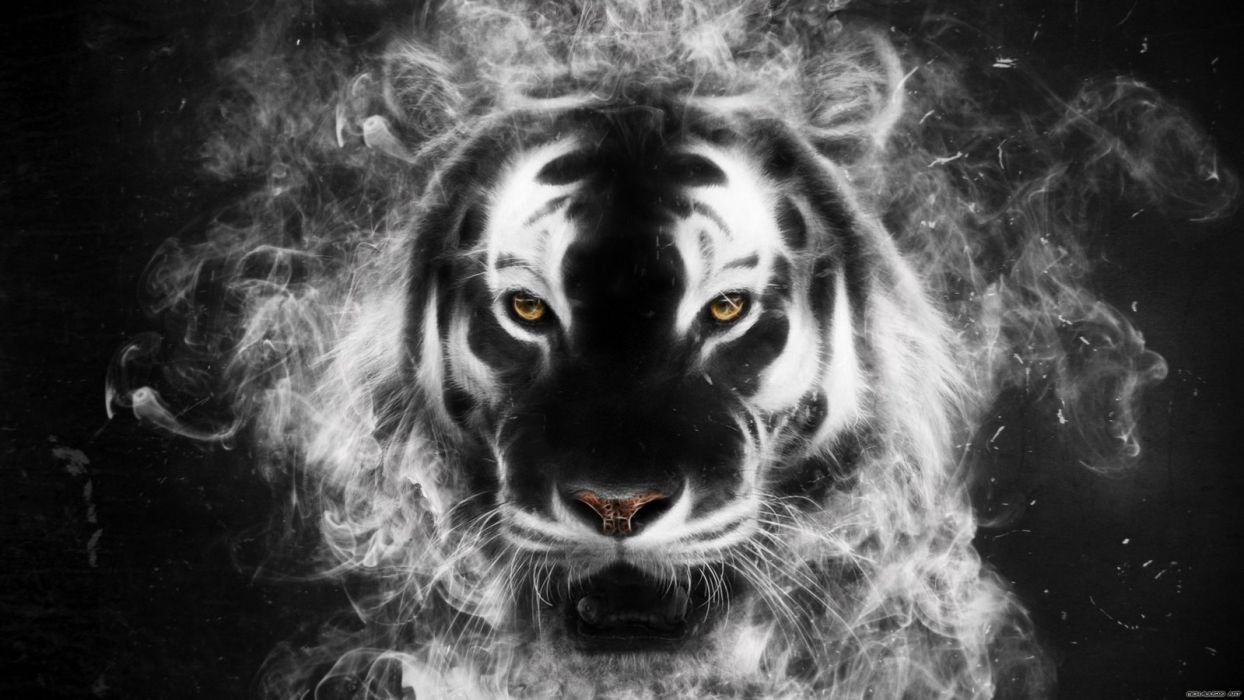 Tiger from my mind wallpaper
