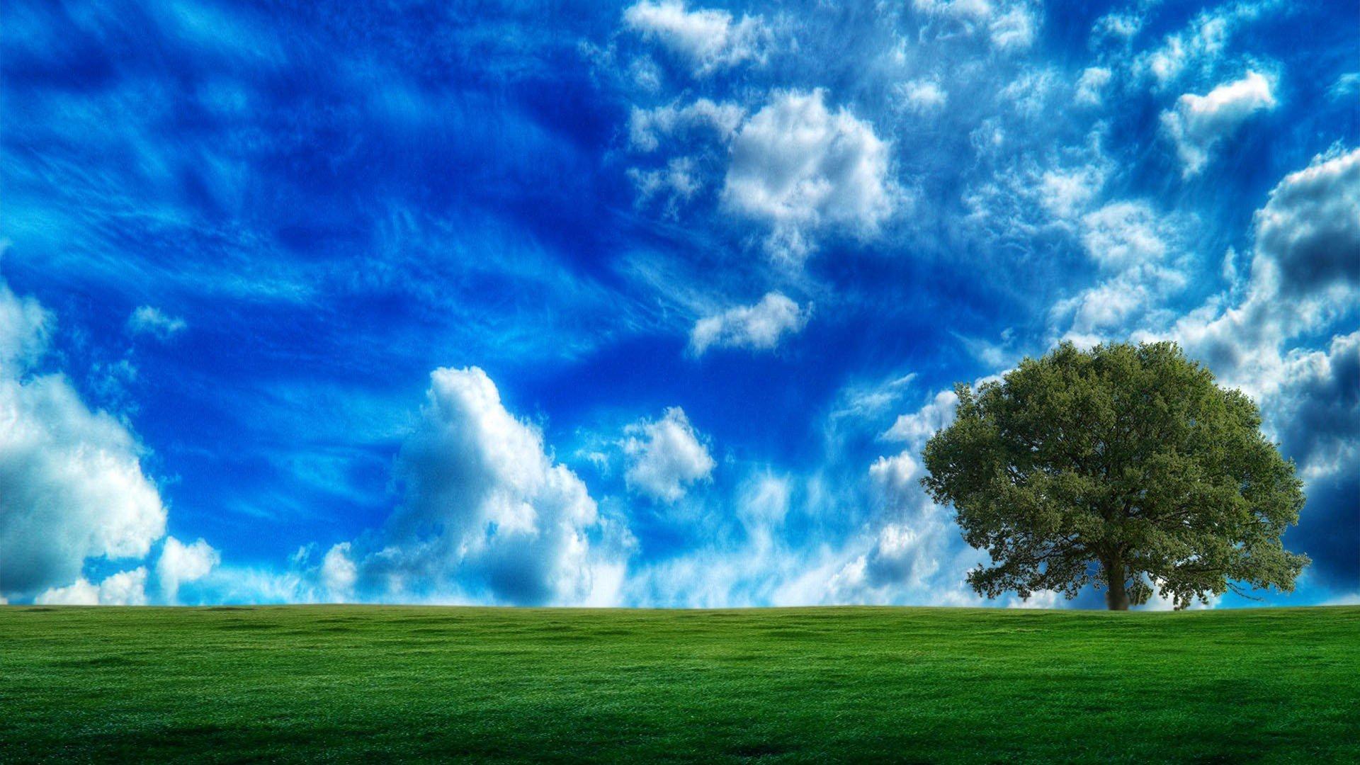 природа небо облака деревья поле nature the sky clouds trees field  № 243740  скачать