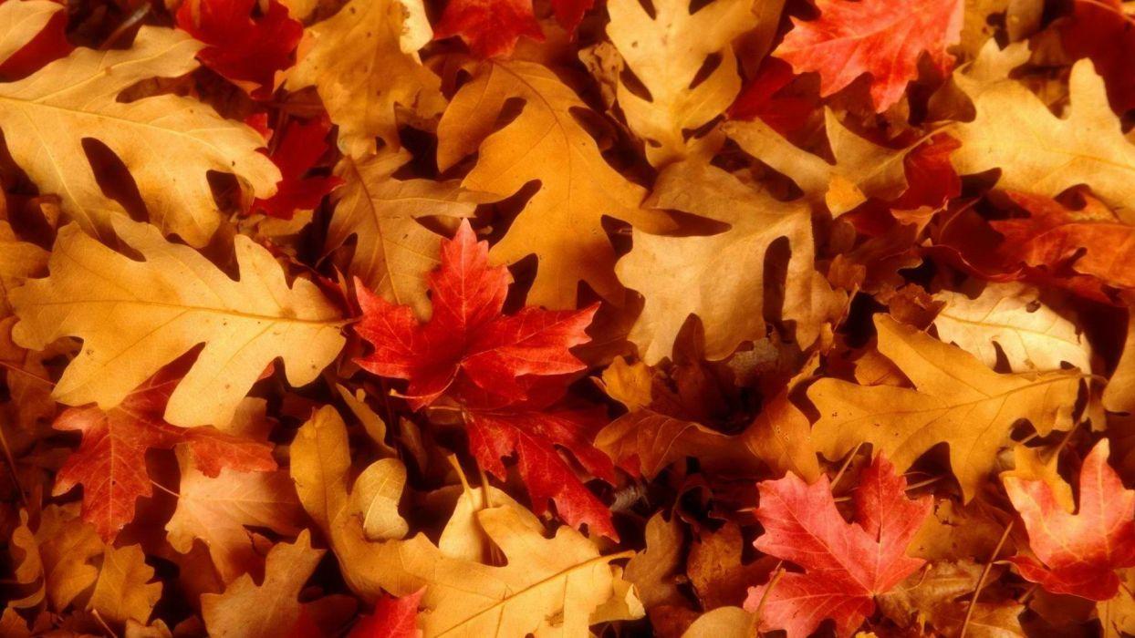 leaves Utah oak fallen leaves wallpaper