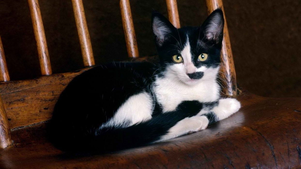 black and white cats wallpaper