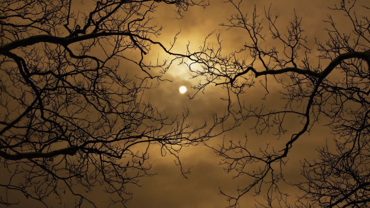 Harvest Moon skyscapes branches wallpaper