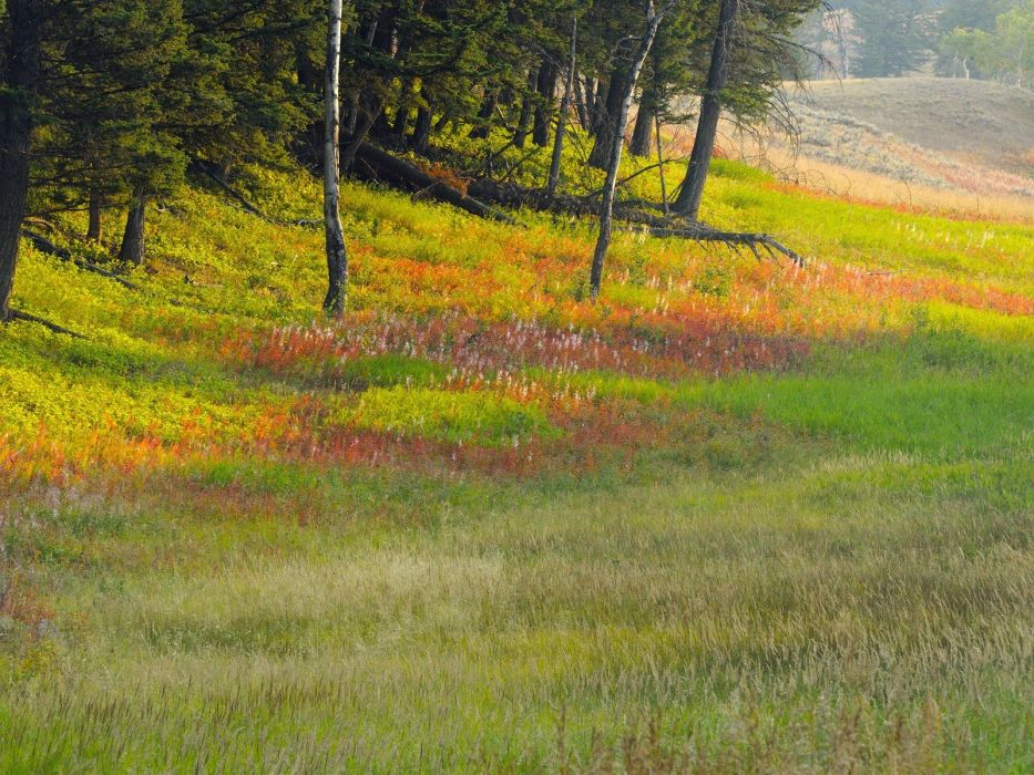 landscapes nature deer Wyoming Yellowstone National Park plateau wallpaper