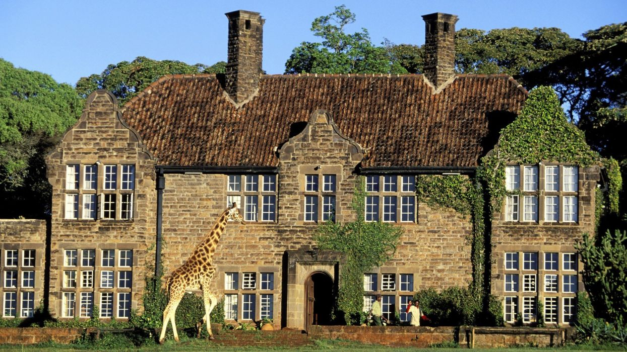 Kenya region giraffes wallpaper