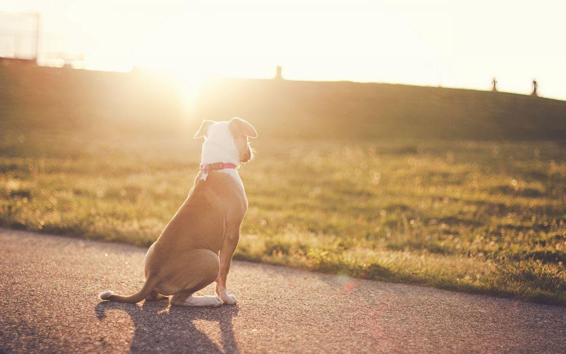 animals dogs sunlight roads wallpaper