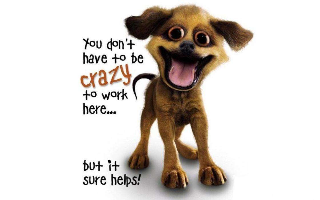 dogs crazy slogan wallpaper
