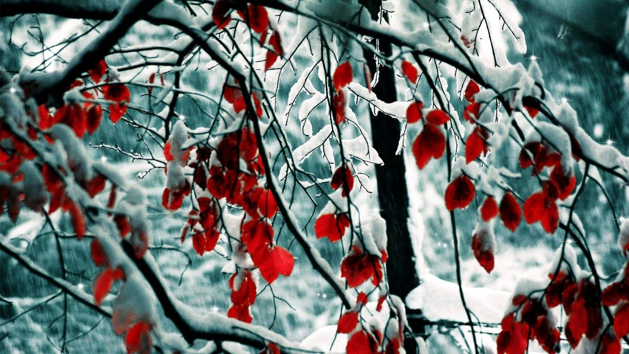 nature winter snow trees leaves selective coloring wallpaper