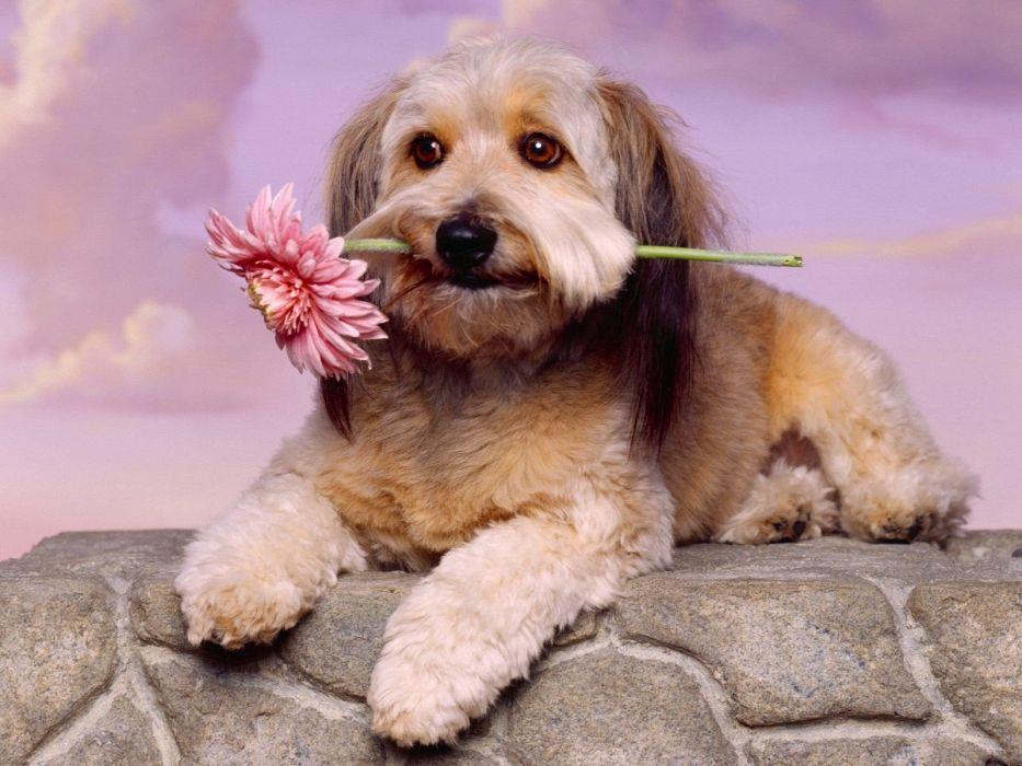 flowers animals dogs wallpaper