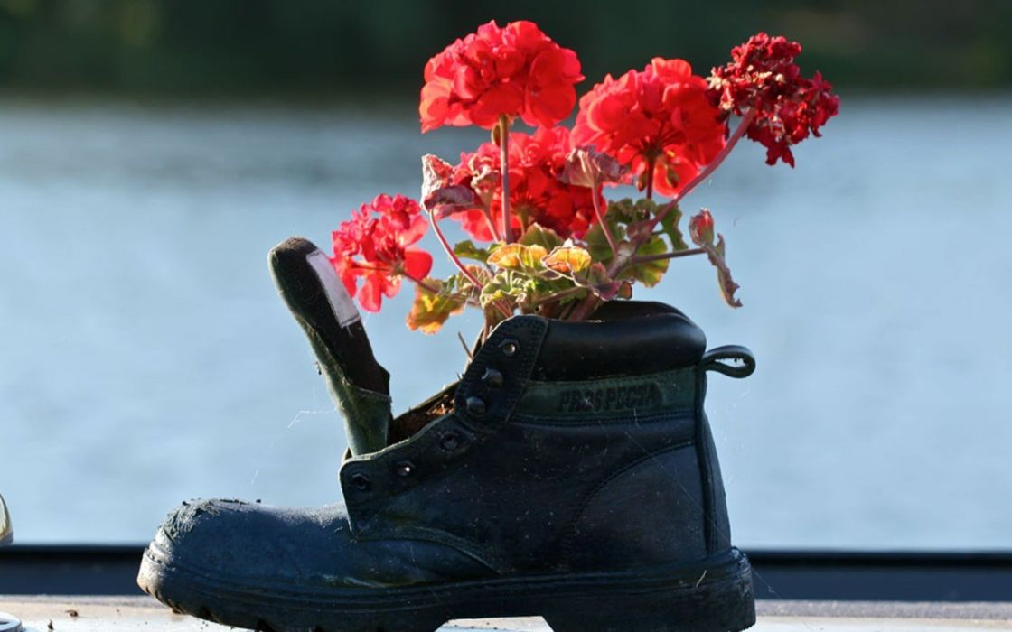 flowers shoes wallpaper