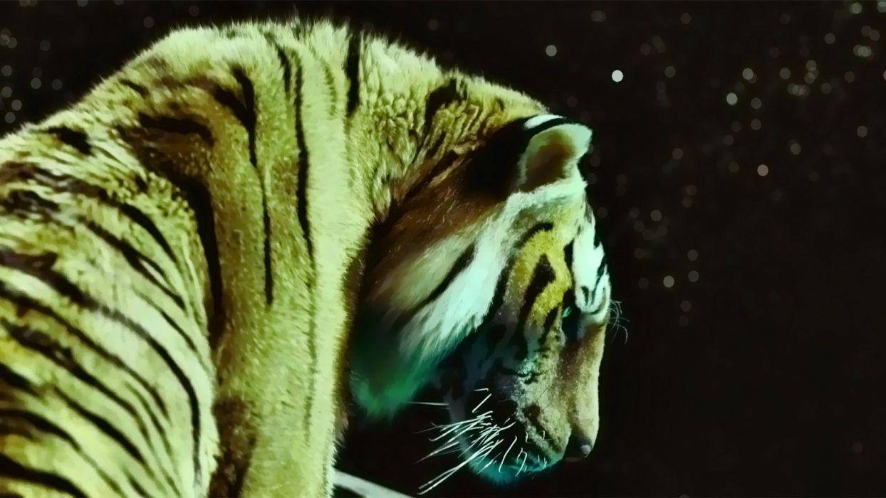 movies tigers Life of Pi wallpaper