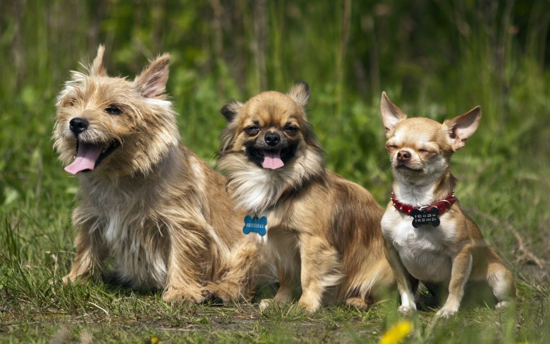 animals dogs outdoors pets wallpaper