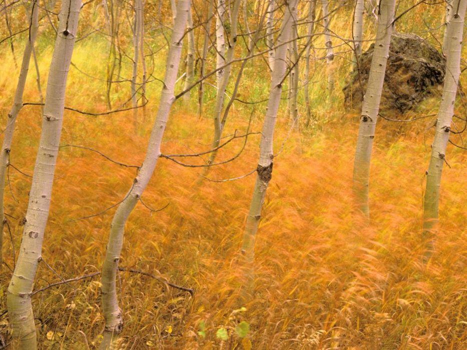 landscapes nature trees wallpaper