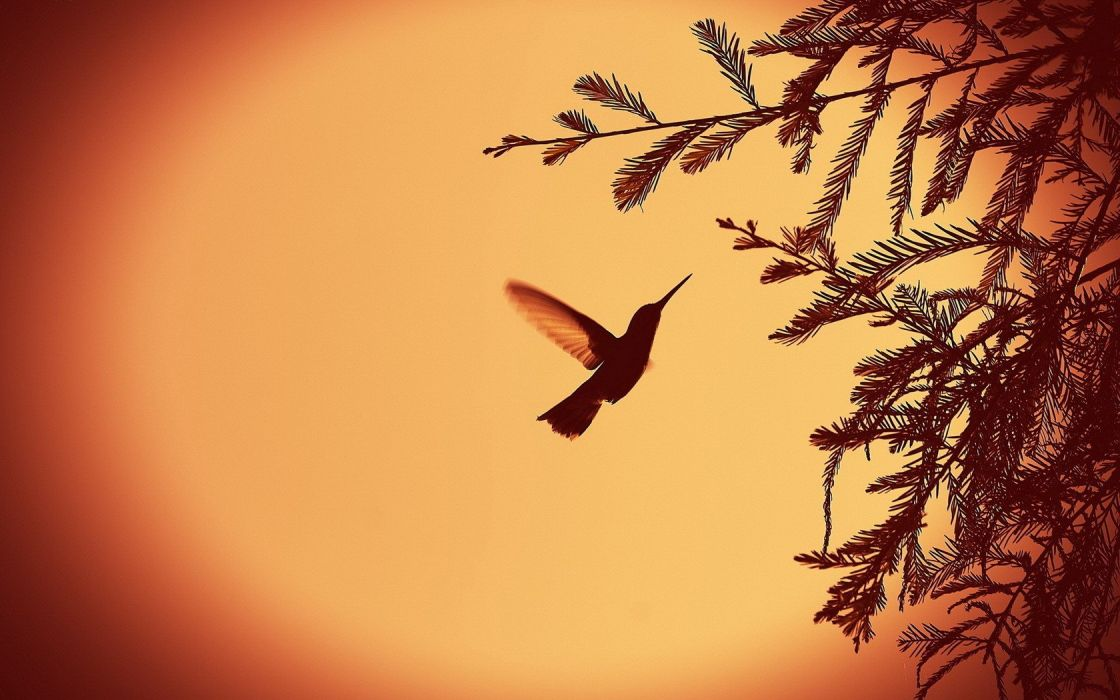 nature leaves silhouettes monochrome hummingbirds wallpaper