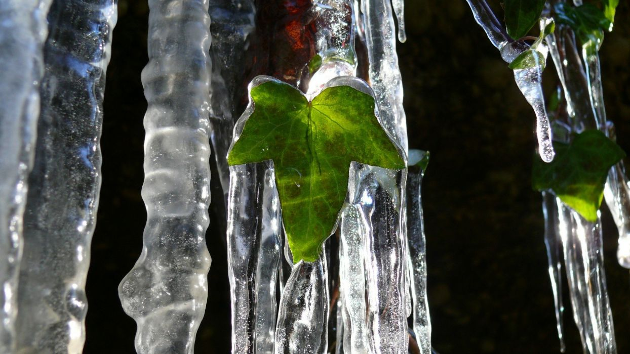 ice nature leaf wallpaper