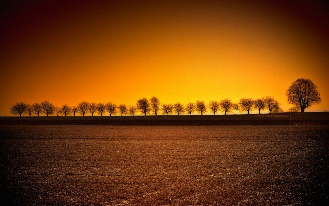 sunset landscapes trees wallpaper
