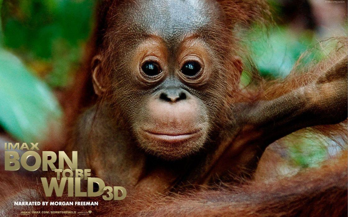 movies animals film Born to be Wild wallpaper