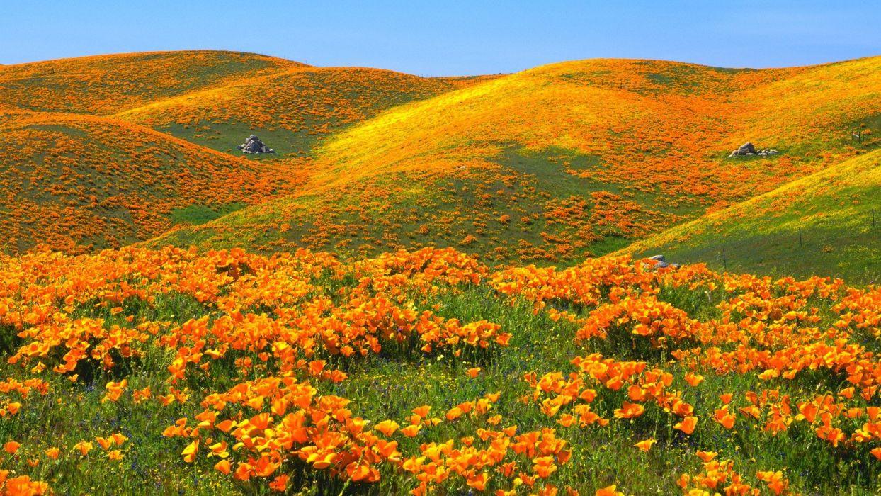 hills valleys California antelope yellow flowers poppies wallpaper