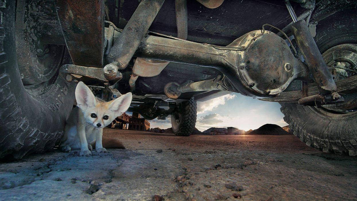 eyes cars animals deserts ground tires fennec fox ears wallpaper