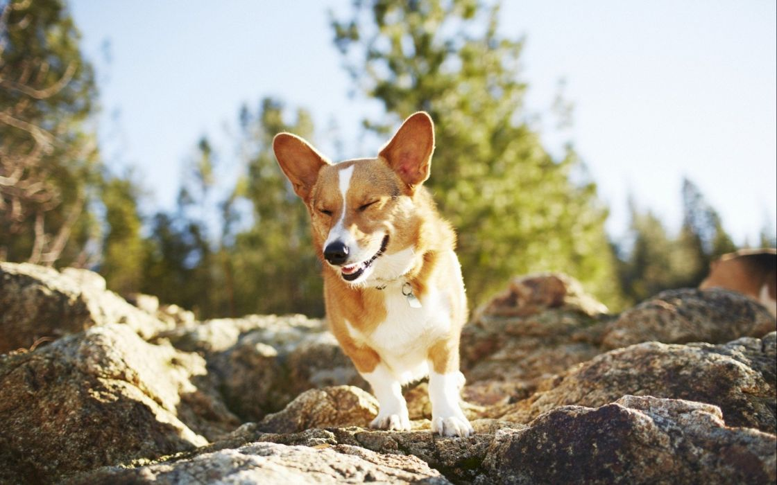 animals dogs rocks wallpaper