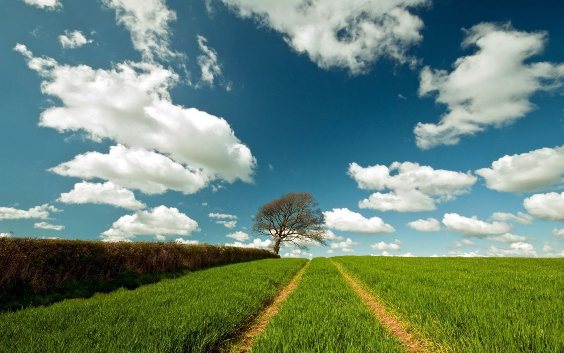 clouds landscapes trees skyscapes wallpaper