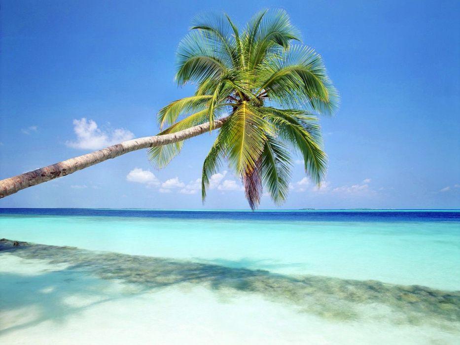 nature shore palm trees sea beaches wallpaper