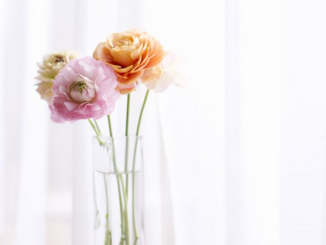 flowers home simple background still life wallpaper