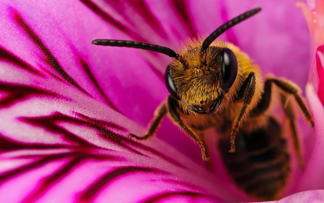 nature insects bees wallpaper