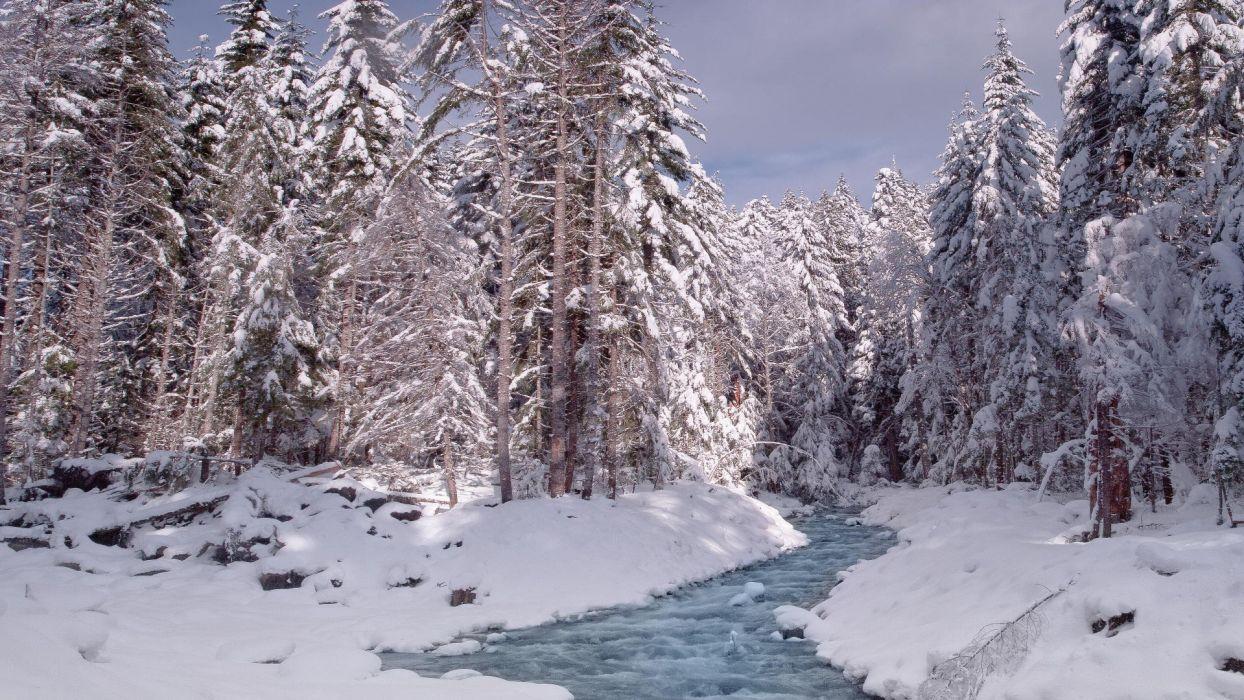 nature winter snow National Park Washington Mount Rainier wallpaper